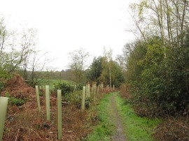 Path from Horsemoor Lane
