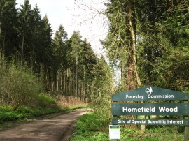 Homefield Wood