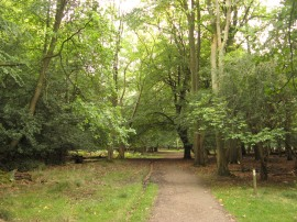 Woodland at Aldbury Common