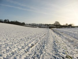 Fields nr Breachwood Green