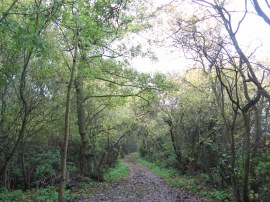 Woodland nr Westways Farm
