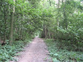 Path through Boxley Wood