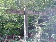 Forest Way Signpost