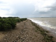 Sea Shore, Mersea Island