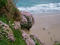 Thrift, Watergate Bay
