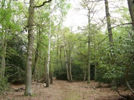 Sheepcote Woods