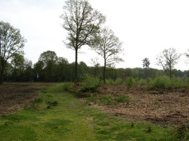 Littleworth Common