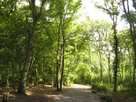 Hockley Wood