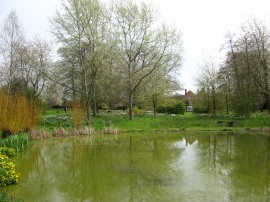 The large garden pond